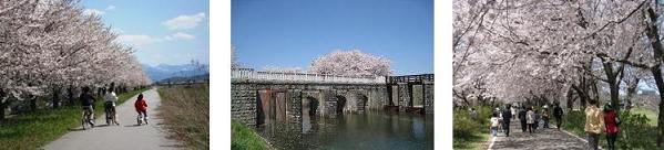 【新発田】長堤十里加治川さくら物語~散策マップ~ができました